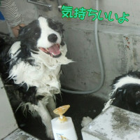 プールの締めはシャワー(V)o¥o(V)~ドッグリゾートWoof
