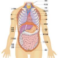 内臓へのセルフケア      金沢市    整体    肝臓    腎臓