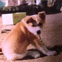 ペット-初代犬