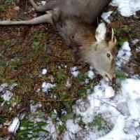 正月22日の狩猟
