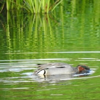 野鳥を撮るのは難しい 厳島湿生公園