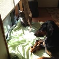 寒さは犬猫の垣根を低くする