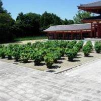 奈良 薬師寺