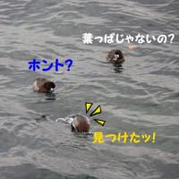 小さくても、魚はさかな・・・♪