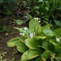 今日はポカポカ陽気 庭の花畑は春爛漫…