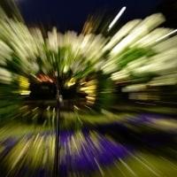 山下公園のバラ・ライトアップ ①