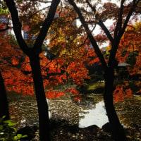 晩秋の日比谷公園-1