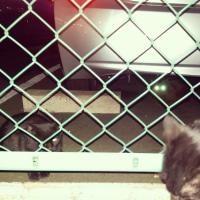 名古屋大須BLACK CATおは猫