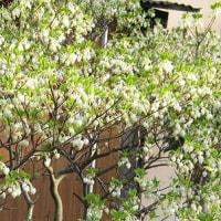 春は花の季節です