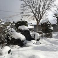 昨日よりは暖かい・・・・朝9時の気温がマイナスじゃなかった。0度・・・・