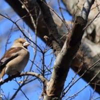 wild birds 2