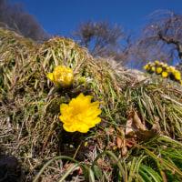 2月27日  信州へ(1) 辰野町沢底地区の福寿草祭り
