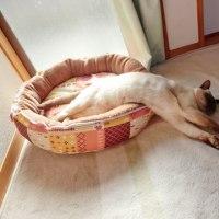水曜日の猫