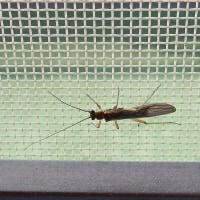 4月中旬の昆虫