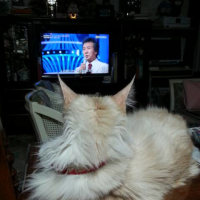 テレビを~~