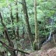三重県 蓮川上流の滝