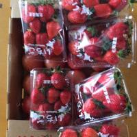 奇跡的イチゴ