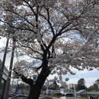 南部町にも春が、きた。