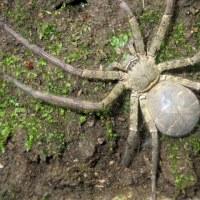 それにしても大きな・・・蜘蛛だ。