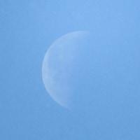 春の下弦の月