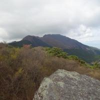 鋸山のカタクリ (4月25日)