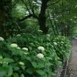 $ 意外なえさを食する、メジロの姿、ドキドキ眺め $ G公園(岐阜県岐阜市)