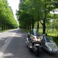 「メタセコイア並木」JSC愛知5月ツーリング