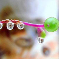 今日の水滴