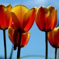 昨日も今日も春爛漫で清々しい