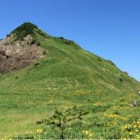 大野亀 トビシマカンゾウの群落