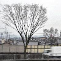 松竹新喜劇、深夜の録画