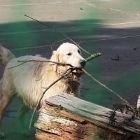 🍀八ヶ岳  犬の牧場🐾チビちゃんたち🍀