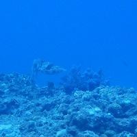 天気予報はずれ~雨降らず最高! 沖縄ダイビング 那覇シーマリン
