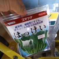 小松菜播種