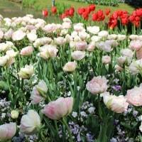 チューリップ溢れるとっとり花回廊へ