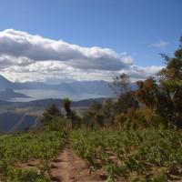 グアテマラ サンタ・アニータ農園