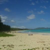 ハワイ旅行4日目 ハワイでも掘ってます。でも掘れません。