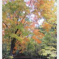 神楽岡公園の紅葉
