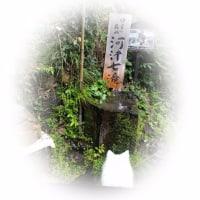 おフランス=河津バガテル公園&Japan=河津七滝(*´▽`*)♪♪