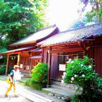 鎌倉権五郎神社として知られている「御霊神社」