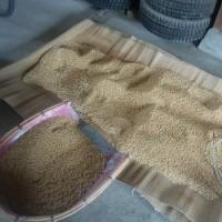 今年も米作りのスタート、種蒔き!!