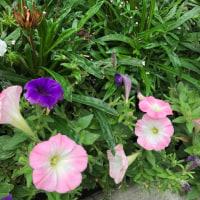 咲きほこる花たち
