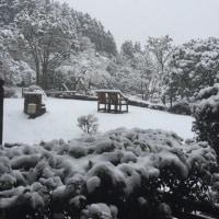 春はどこへ? 雪の箱根