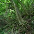 檜洞丸北尾根