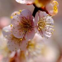 梅の香りに誘われて-兵庫県姫路市:好古園