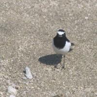水辺で見かける鳥たち
