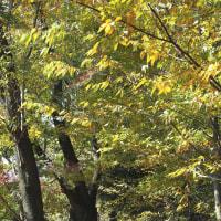 玉川上水の木漏れ日の下