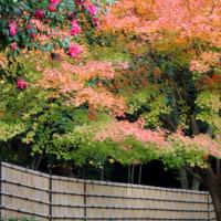名古屋 徳川園 2