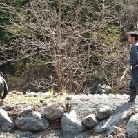 2017年 井川漁協主催 あまご祭り事前準備お手伝い