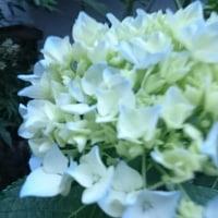 美しき花に喜びと悲しき時に。